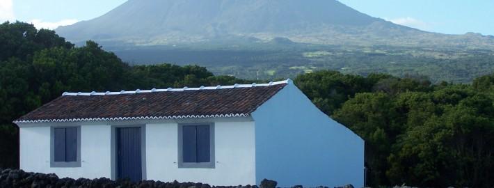 Les Açores : île de Pico