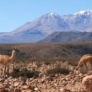 chili 2 410a